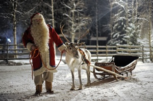 Santa Claus prepars his Reindeer and sled in Rovaniemi, on December 16, 2008. Rovaniemi's Christmas theme park is in full swing, teeming mainly with families with children eager to meet Santa and his elves. In 2007, almost one million tourists visited Finnish Lapland above the Arctic Circle, 360,000 of whom were foreigners, mainly from Britain, Germany, France, the Netherlands, Norway and Russia, according to the regional council of Lapland. AFP PHOTO / OLIVIER MORIN (Photo credit should read OLIVIER MORIN/AFP/Getty Images)
